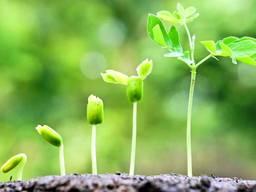 Регулятор роста растений МАРС-У, от канистры 5 кг