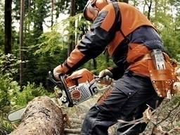 Робота бензопилою, послуги лісоруба, поразка дров