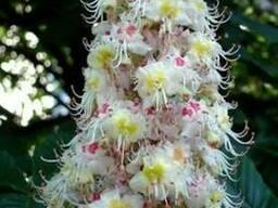 Продам Каштан цвет