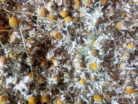 Ромашка цвет, трава