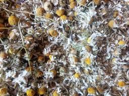 Ромашка цвет, трава - фото 1