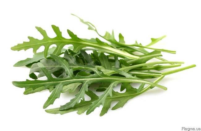 Руккола-свежая зелень