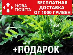 Рукола семена 1 грамм (около 700 шт) Erúca satíva
