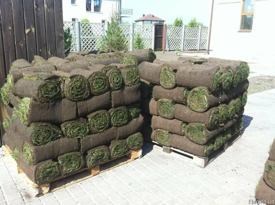 Рулонный газон Укладка.