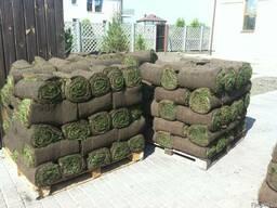 Рулонный газон Укладка. - фото 1
