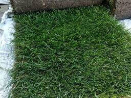 Рулонный газон в харькове с работой