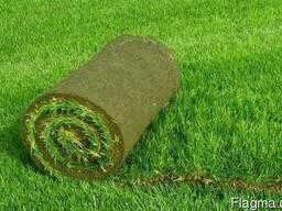 Рулонный газон в Кременчуге