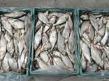 Рыба речная свежемороженная - фото 5