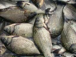 Рыба Свежая и С/М