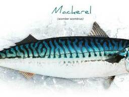 Рыба свежемороженная, с НДС. Продам