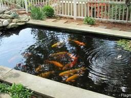 Рыбки, цветные карпы, водные растения, корм coppens, jpd