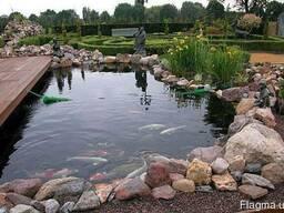 Консультации, водоем, карп кои, водные растения, сад, рыбки