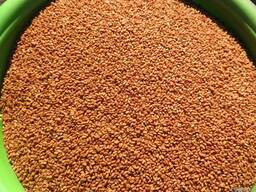 Рыжик семена, сорт Юбиляр