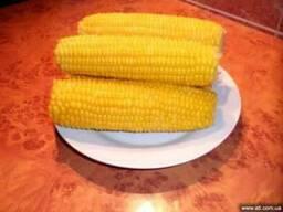 Сахарная кукуруза замороженная в початках