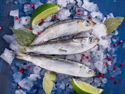 Салака черноморская свежая вкусная рыба