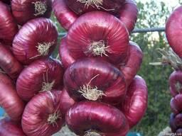 Салатный лук ялтинский