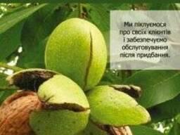 Саженцы грецкого ореха сорта Чандлер, Фернор, Фернет