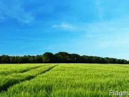 Сдам в аренду 1000 га сельхозземли Черниговская область