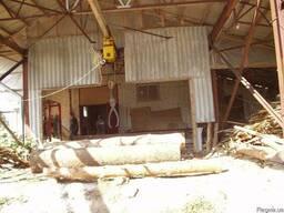Распиловка леса - фото 3