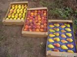 Сельхоз предприятие одесская обл - фото 2