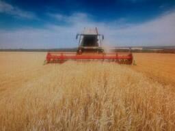 Сельхозпредприятие в Черниговской области