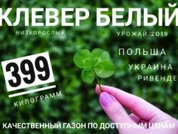 Семена Белого Клевера