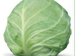 Семена белокочанной капусты AKIRA F1 / АКИРА F1.
