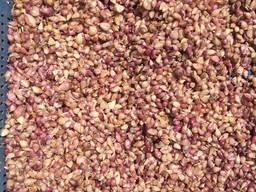 Семена чеснока Софиевский для посадки весной
