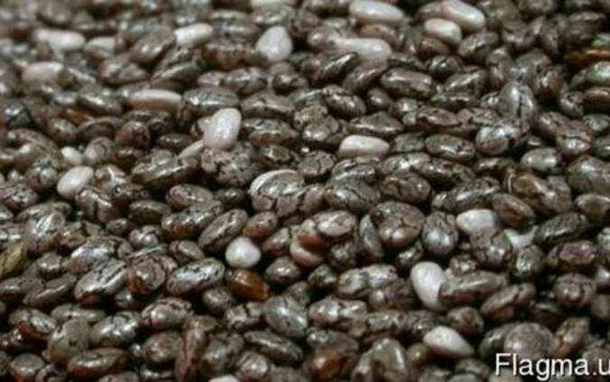 Семена Чиа « Шах »