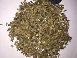 Семена эхинацеи пурпурной.