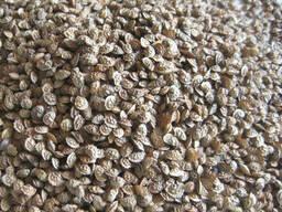 Семена эспарцета