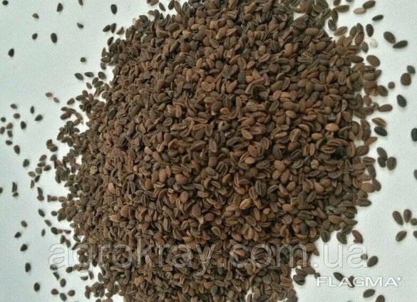 Семена фацелии фацелия медонос от 25кг фацелія