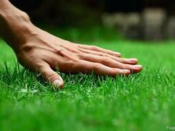 Семена газонной травы. Универсальная смесь.