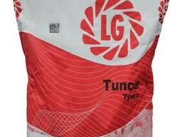 Семена гибрида подсолнечника Тунка от Лимагрейн (Limagrain)