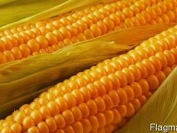 """Семена кукурудзы """"Фурио"""" ФАО 350"""