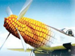 Семена кукурузы Аробаз