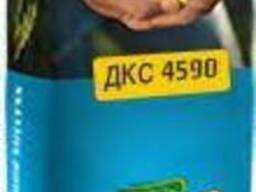 Семена кукурузы ДКС 4590 (Мonsanto)