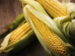 Семена кукурузы ДН Страйд