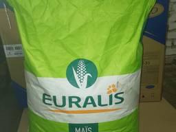 Семена кукурузы ЕС Москито ФАО 350 Евралис