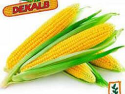 Семена кукурузы Монсанто ДКС 2690 ФАО 250