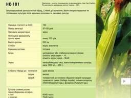 Семена кукурузы НС 101 купить, НС 101 цена