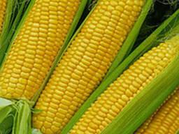 Семена кукурузы П9400/ P9400