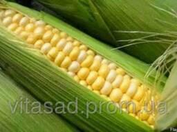 Семена кукурузы Подільский 274 СВ. цена 15грн/кг.
