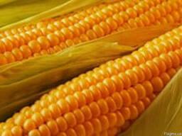 Семена кукурузы ПР39Г32