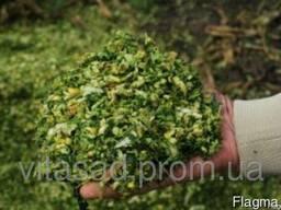 Семена кукурузы Силос (3-4 фр) 14, 50 грн/кг.