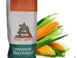 Семена кукурузы София - фото 1