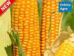 Семена кукурузы ТОР