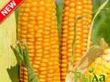 Семена кукурузы ТОР - фото 1