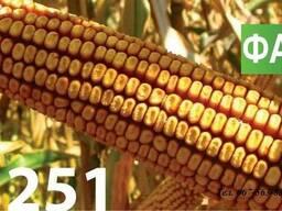 Семена кукурузы Венгерской селекции МВ 251 (ФОА 280)