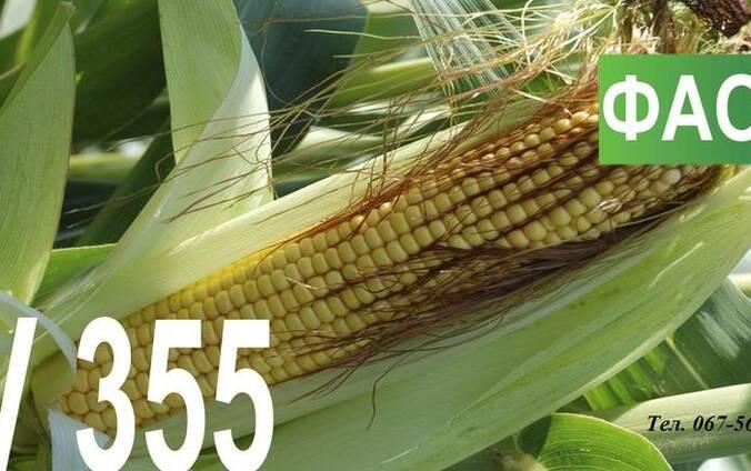 Семена кукурузы Венгерской селекции МВ 355 (ФАО 340)